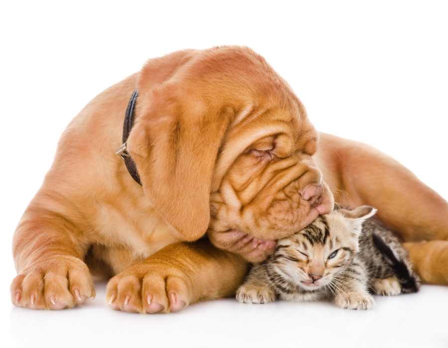 Do Bengal Cats And Dogs Get Along